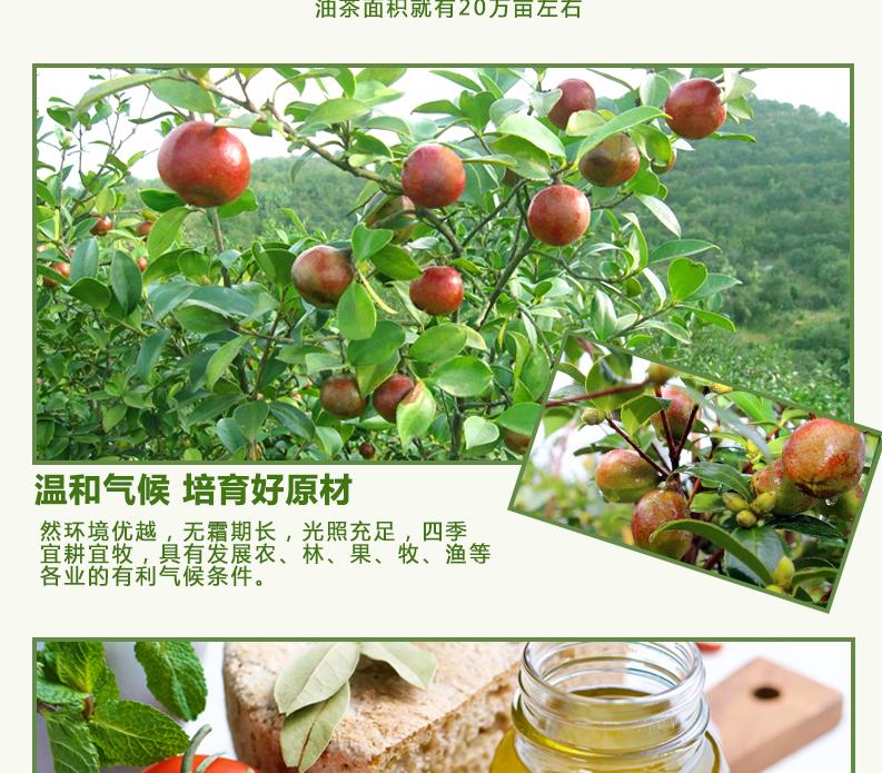 阳康茶油详情图_07.jpg